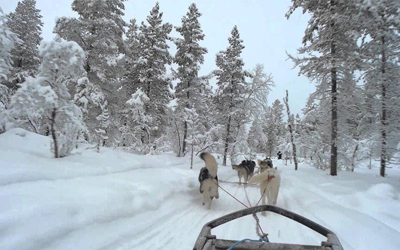 experiencias-next-destinium-12-osos-polares