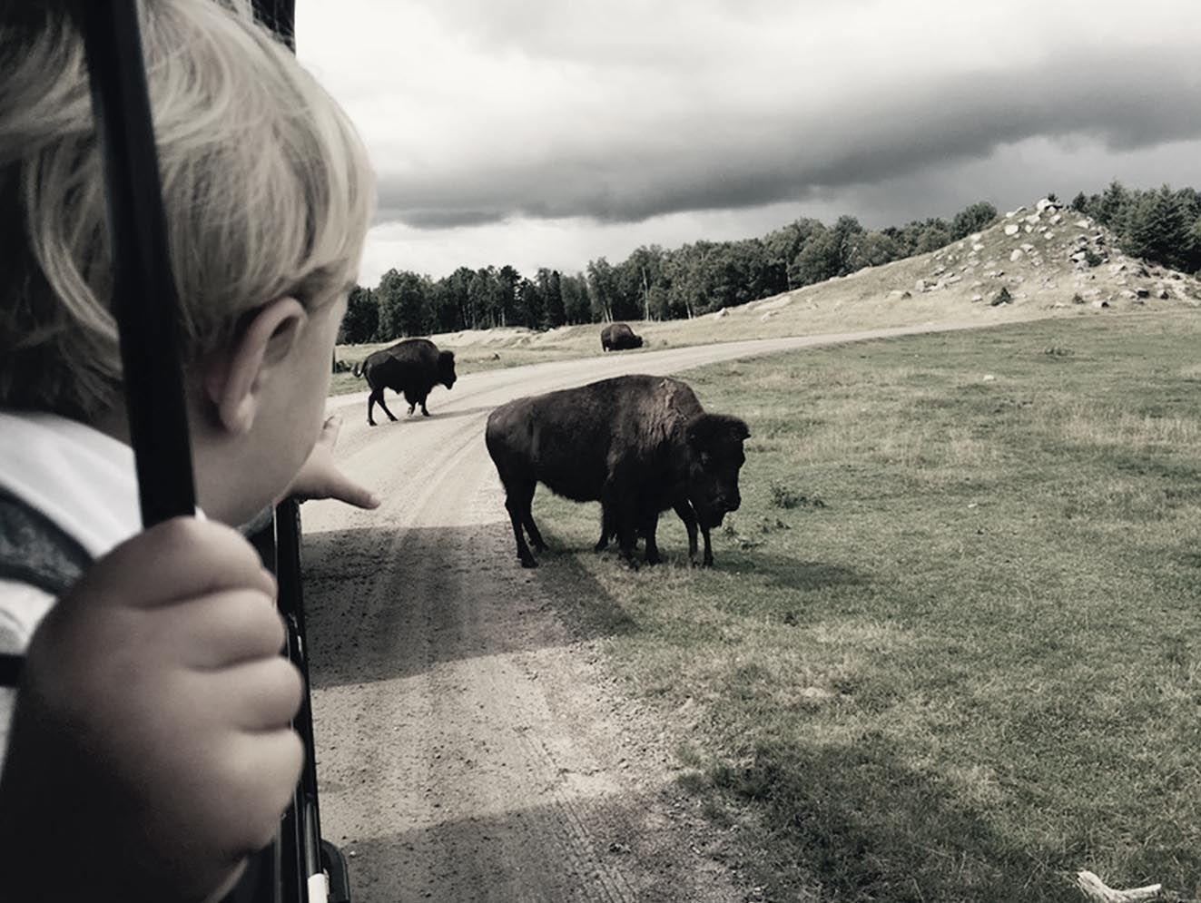 next-destinium-somos-viajeros_0006_bisontes
