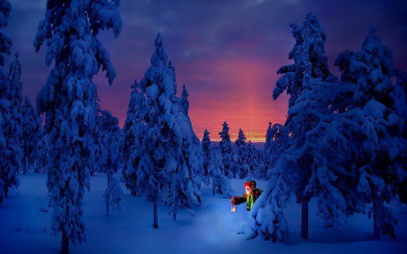 next-destinium-experiencias-laponia_0001_elf-forest-jpg