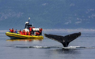 ver ballenas en zodiac en canada