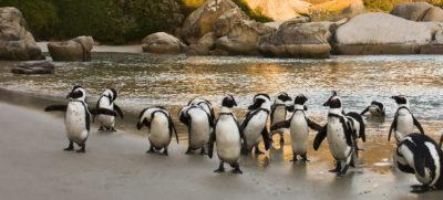 visitar cabo buena esperanza pinguïnos ciudad del cabo