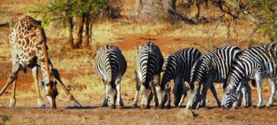 safari fotográfico sudafrica verano