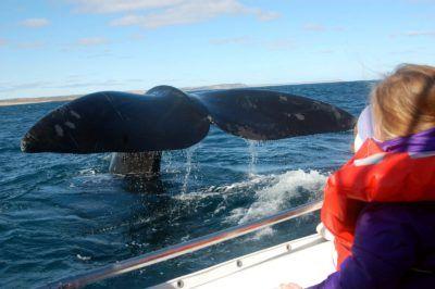 ver ballenas en un viaje a argentina