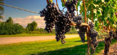 visitar bodegas niagara on the lake wine canada