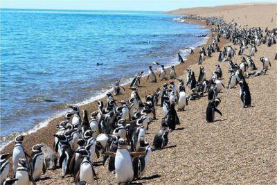 ver pinguinos en viaje a argentina