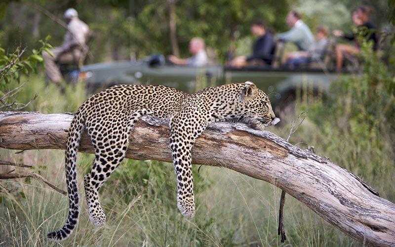 safari-kruger-fotografico-leopardo