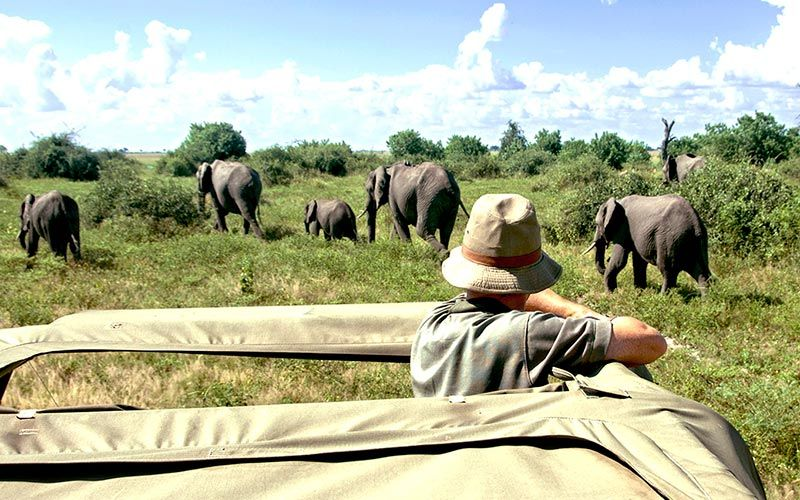 safaris-en-moremi-botswana