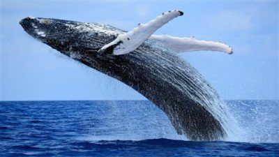 observar ballenas en canada