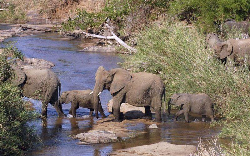viajes a sudafrica kruger nacional parque