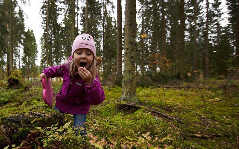 explorar-la-naturaleza-salvaje-de-laponia-en-verano