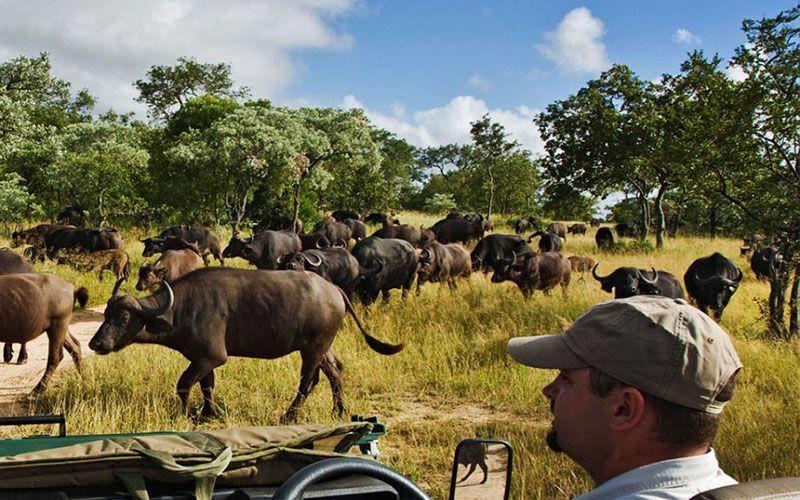 Safaris en el Parque Nacional de Kruger
