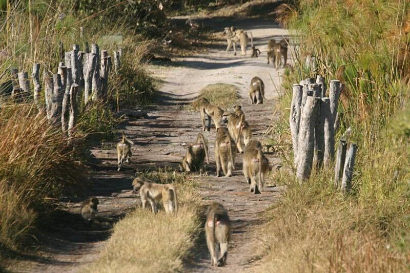 viajar por botswana